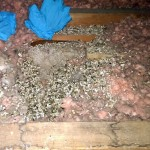 Vermiculite Insulation in Attic