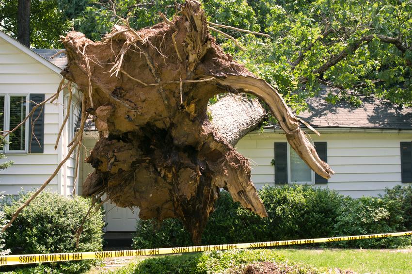 tree damaged house